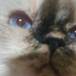 callie-cat