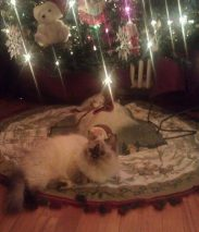 Callie under the tree
