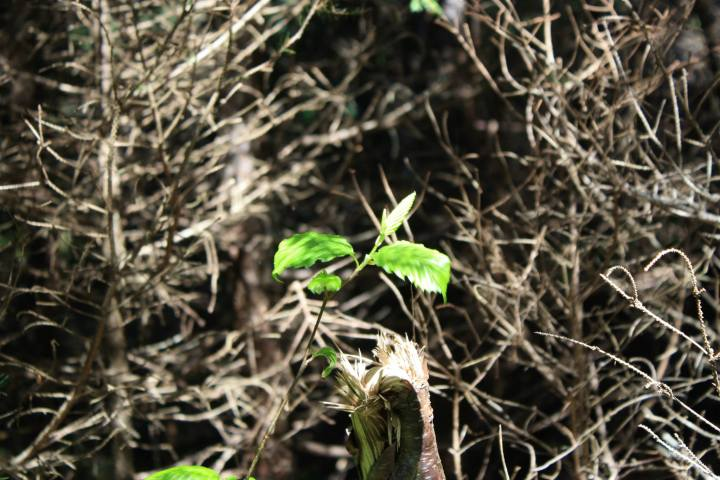 leaf in spring new growth