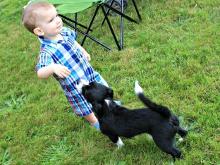 Small children and dogs are natural allies
