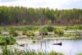 wetlands on the edge of Wood Buffalo village