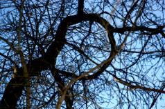 tree-loop