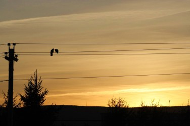 two-crows-at-sunset