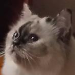 CALLIE CAT love resized