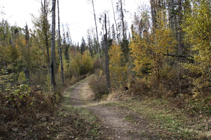Walking the Wolf trail