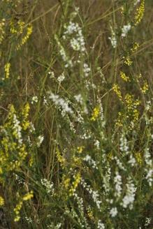 wildflowers in a field