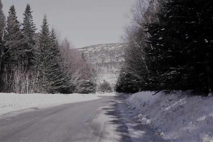 Winter - Carol Hopkins photo